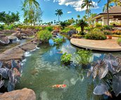 The Koi Pond that is Just Outside the Lobby