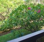 Tropical Garden view from the Lanai