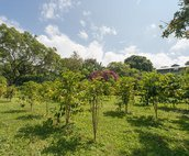 Coffee Grows Below the Home on this Boutique Farm
