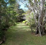 Hiking trails abound in Kokee State park near Waimea