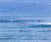 Watch for Surfers, Dolphins and Whales