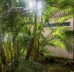 Large lanai shaded by these great arica palms.
